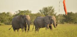 deception valley elephants